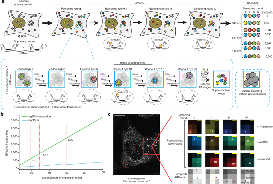 Transcriptome-scale super-resolved imaging in tissues by RNA seqFISH+