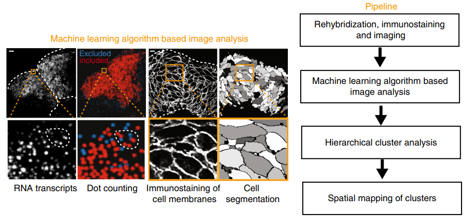 Identification of a neural crest stem cell niche by Spatial Genomic Analysis