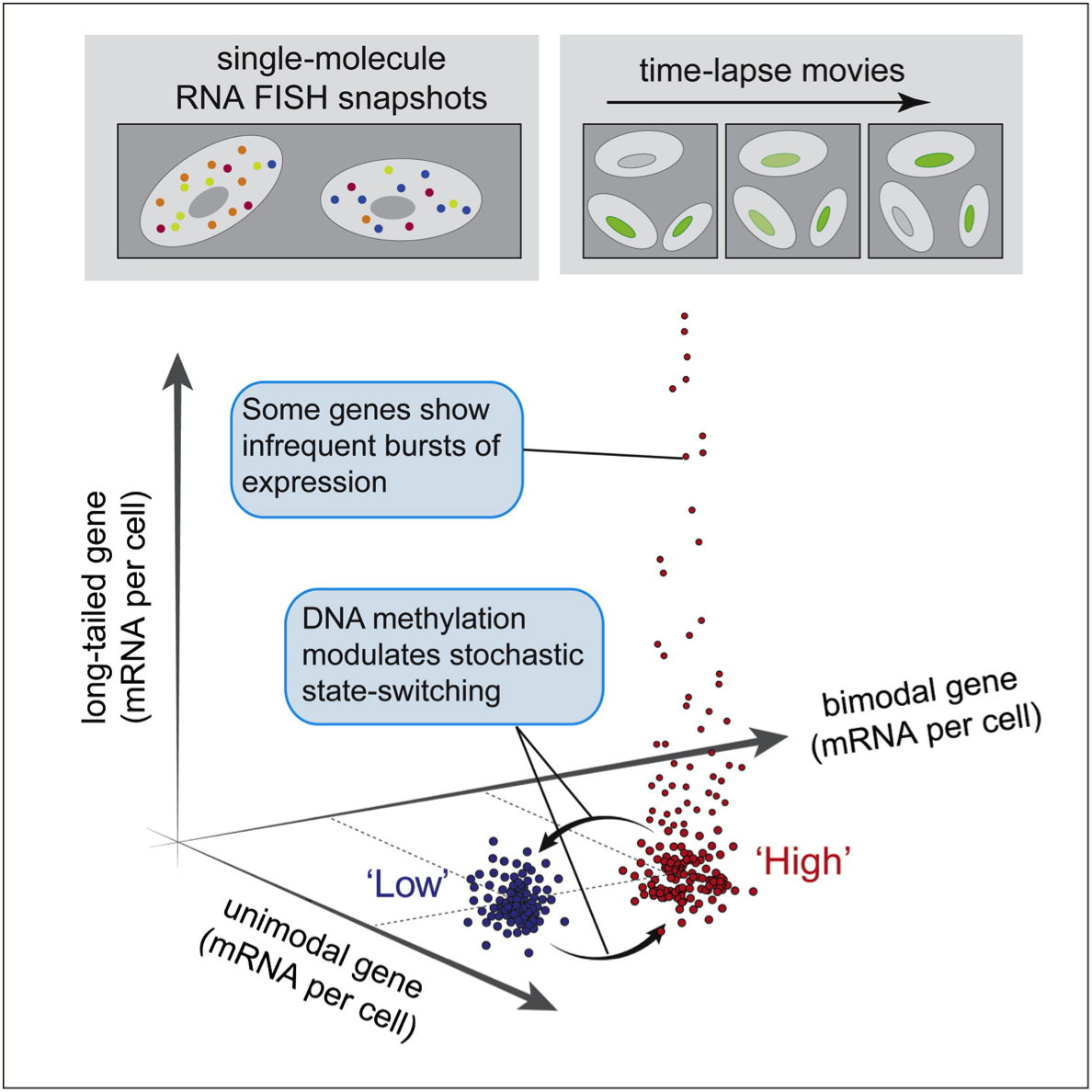Dynamic Heterogeneity and DNA Methylation in Embryonic Stem Cells